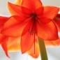 꽃술 (릴레이 22)